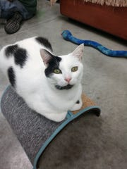 LCHS Pets of the Week: Slogo