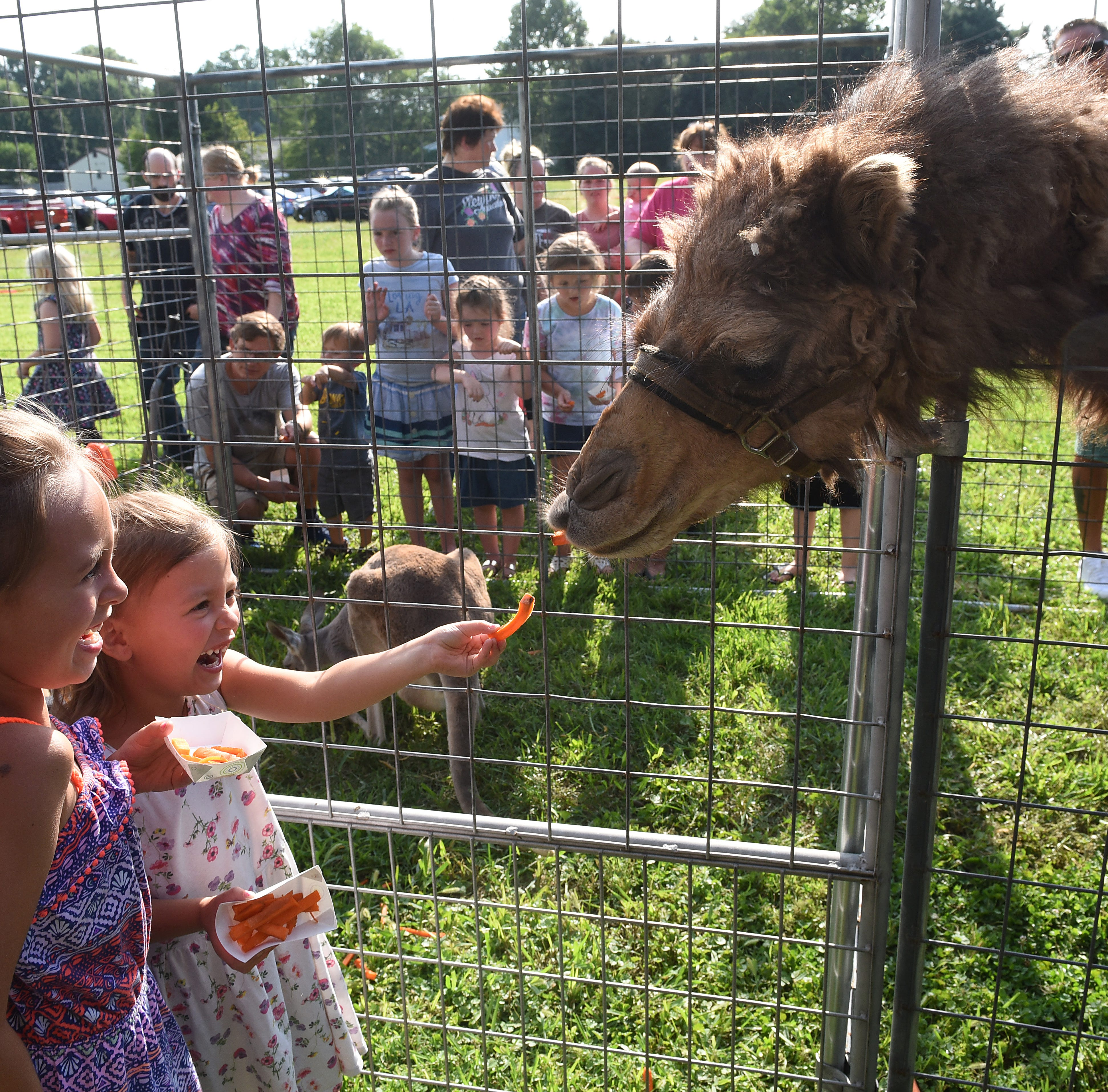 Sisters Ali, 6, and Sera Curtis, 4, tempt a camel with carrot sticks during a visit of the Jungle Island Zoo out of Delphos visited the Pataskala Public Library on Thursday, Aug. 9, 2018.