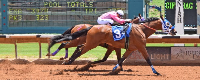 After dumping its jockey at the start, riderless horse Fancy Stripe won an Aug. 4, 2018 race at Ruidoso Downs Racetrack & Casino in Ruidoso Downs, New Mexico. The win doesn't count because a horse must have a jockey aboard to be an official winner, track officials say.