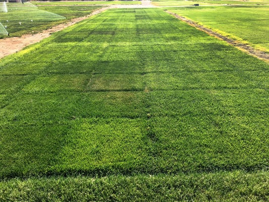 Drought Grass Research 01