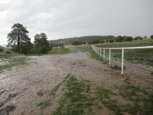 Cherry Creek swamps road