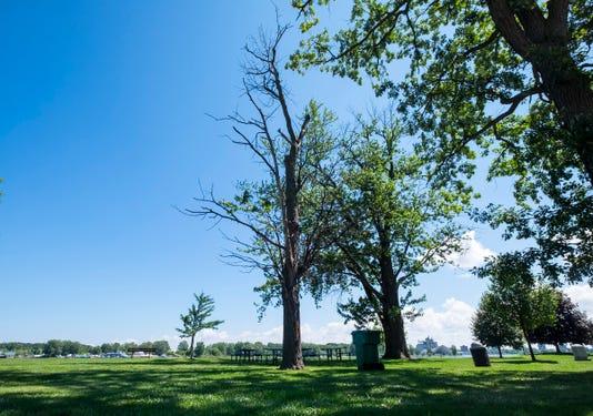 20180810 Dead Trees 0005
