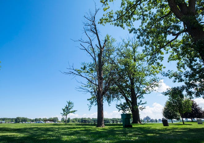 City officials said there are about 120 dead trees or dangerous limbs that need to be addressed, and they will hire contractors to deal with the backlog.