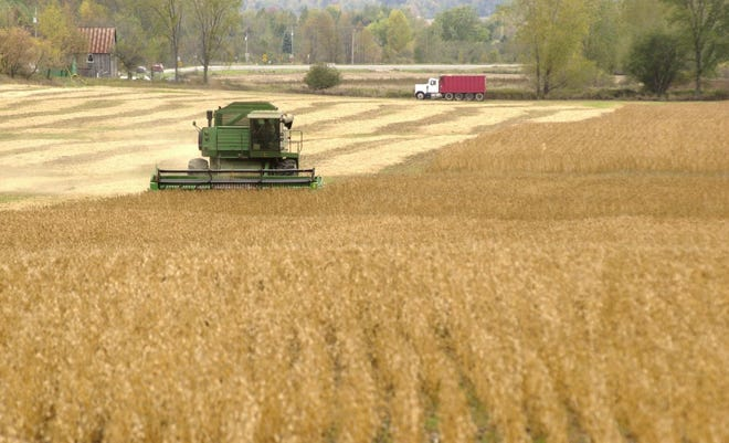 A combine harvests beans north of Applegate.