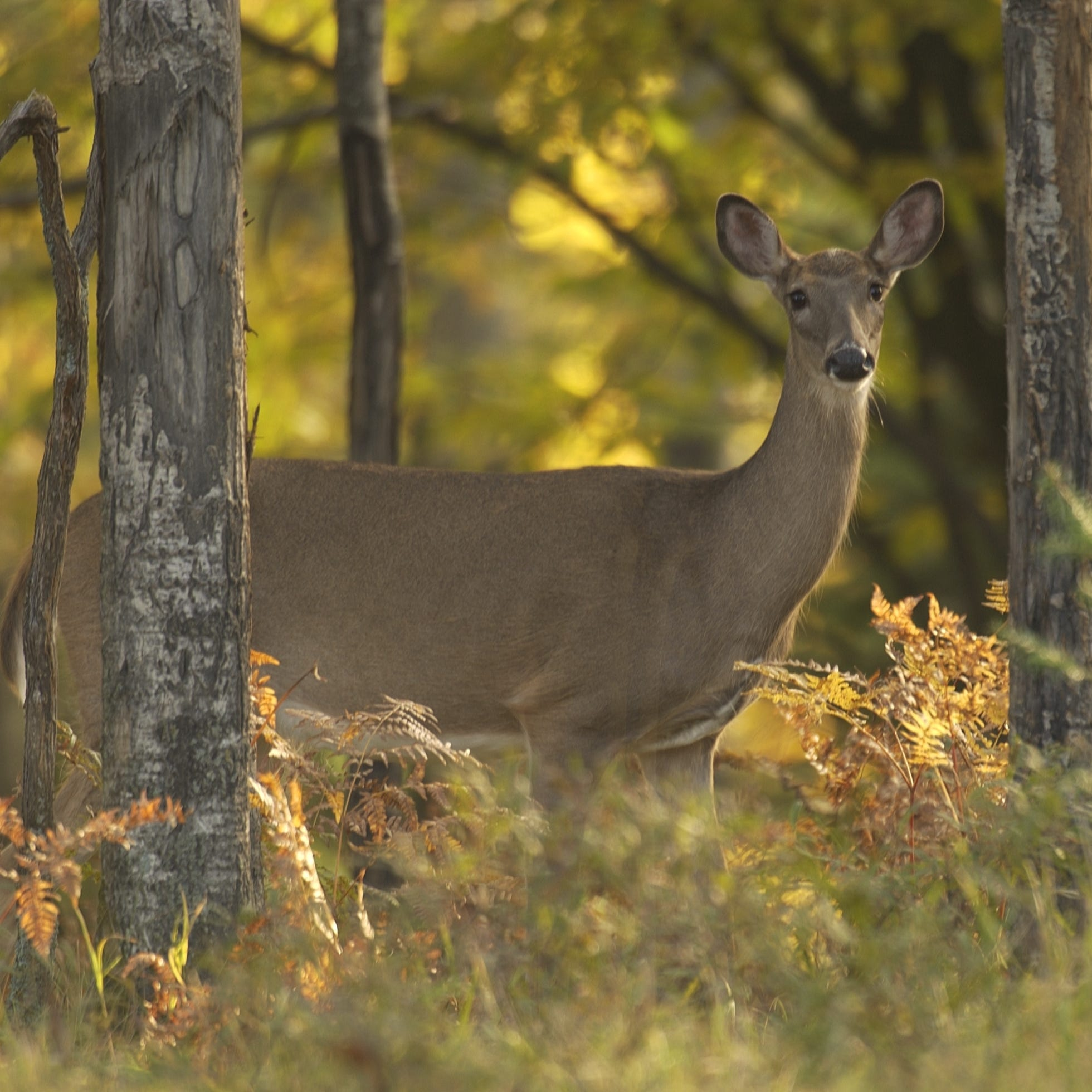 The state has approved new regulations designed to slow the spread of fatal chronic wasting disease.