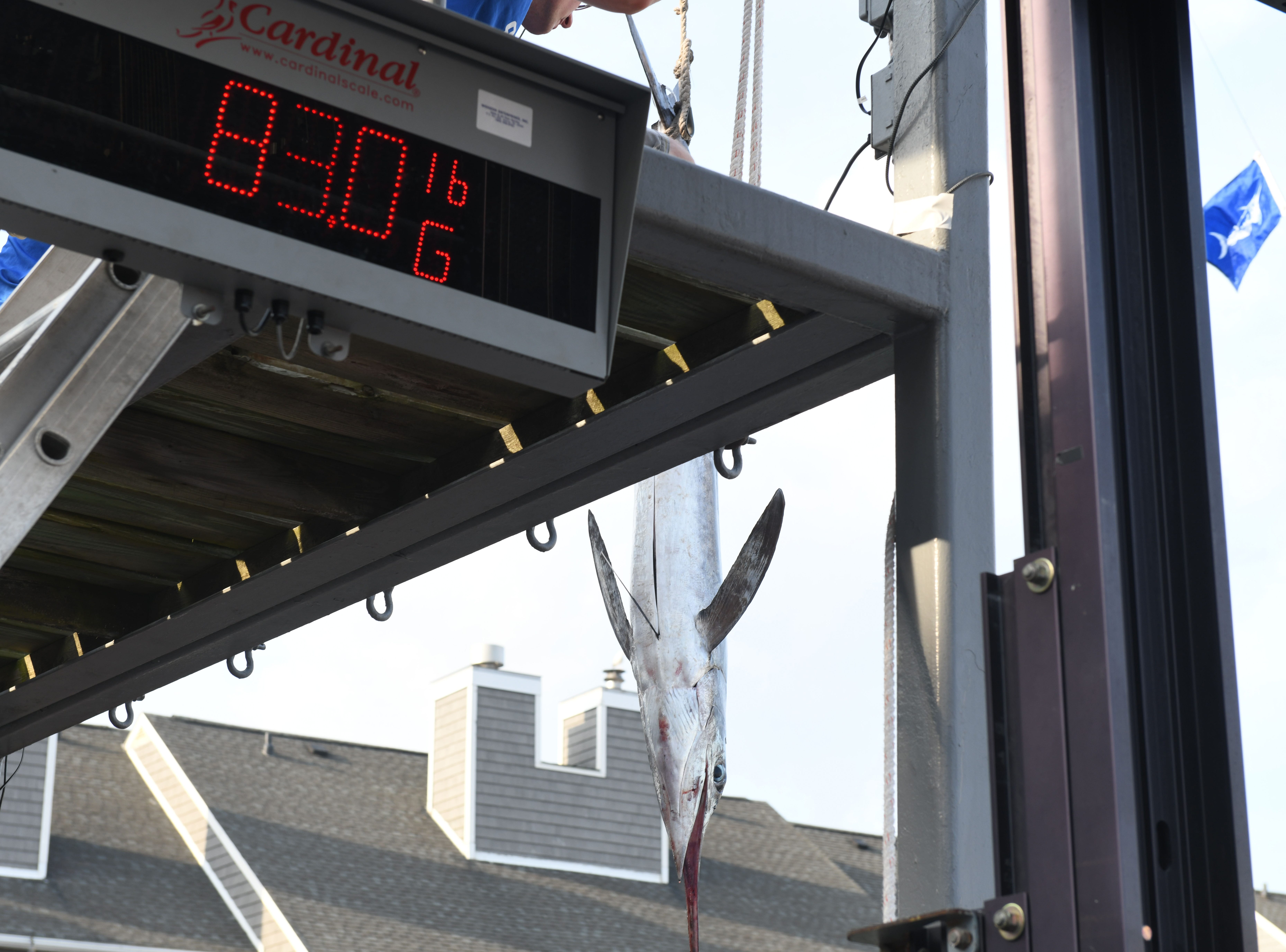 Angler Pascual Jimenez aboard the Weldor's Ark is now tied for first place with an 83 pound white marlin that was weighed in during the 45th Annual White Marlin Open in Ocean City, Md. on Friday, August 10, 2018.