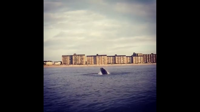 A screenshot image of Kevin Jones' video of a whale near Bethany Beach.
