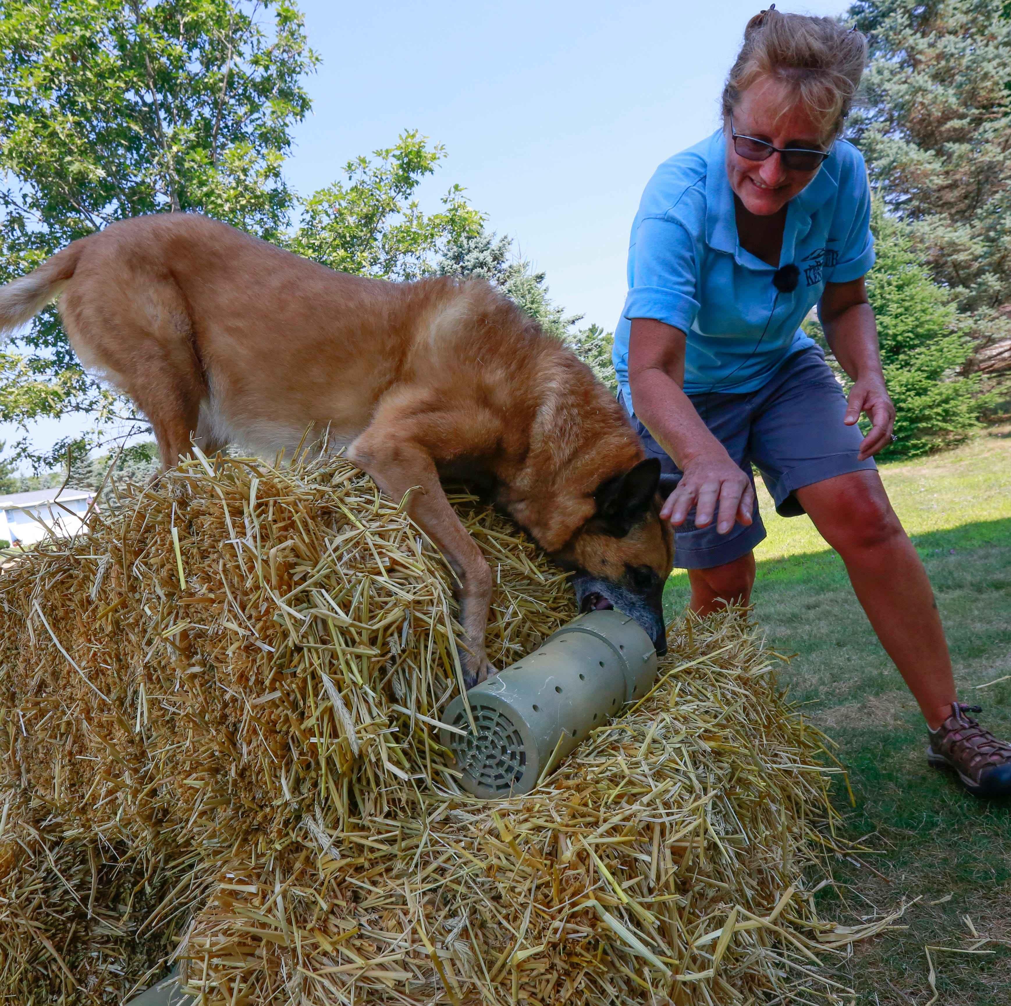 These dogs compete to sniff out rats. It's called barn hunting, and your pup can try, too.