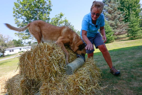 Owner Brenda Blume works with her 10-year-old Belgian malinois, Fishy, demonstrate in finding a rat contain in a PVC tube Thursday, August 9, 2018, at a resident in Kronenwetter, Wis. T'xer Zhon Kha/USA TODAY NETWORK-Wisconsin
