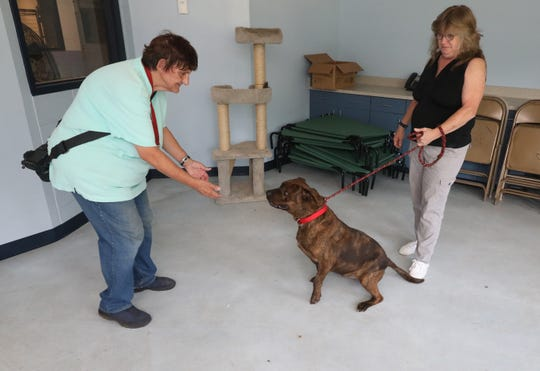 Volunteers Leslie McCauley and Cathy Babit, play with Cola the pit bull at the Yonkers Animal Shelter, Aug. 10, 2018.