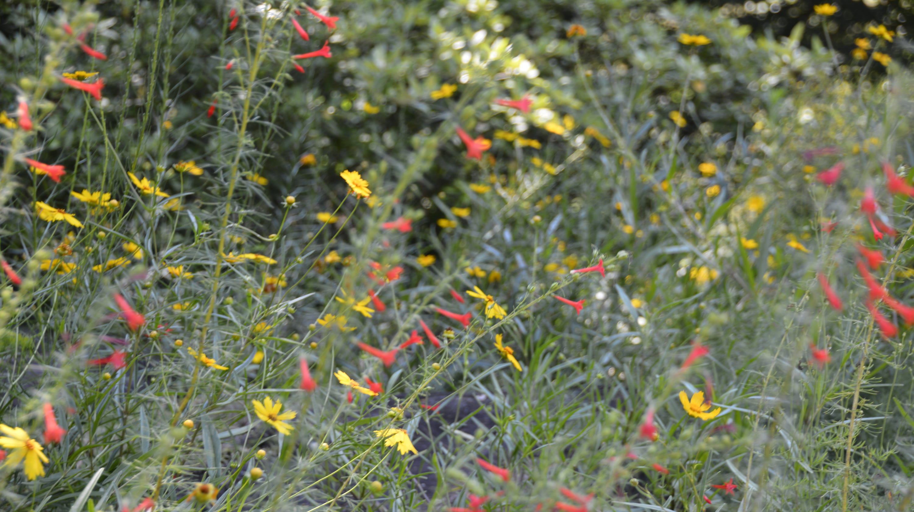 Native Rock Garden Plants Can Take Heat And Drought