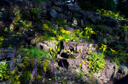 Mt. Cuba Center's rock wall features native plants that handle heat, humidity, and low water access. Plants grow out of the rock and cracks between rocks.