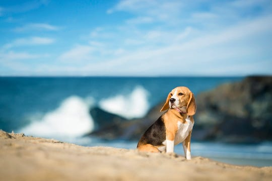 Waves crash behind this doggy in Monmouth County.