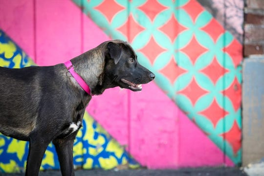 A dog poses in Asbury Park.