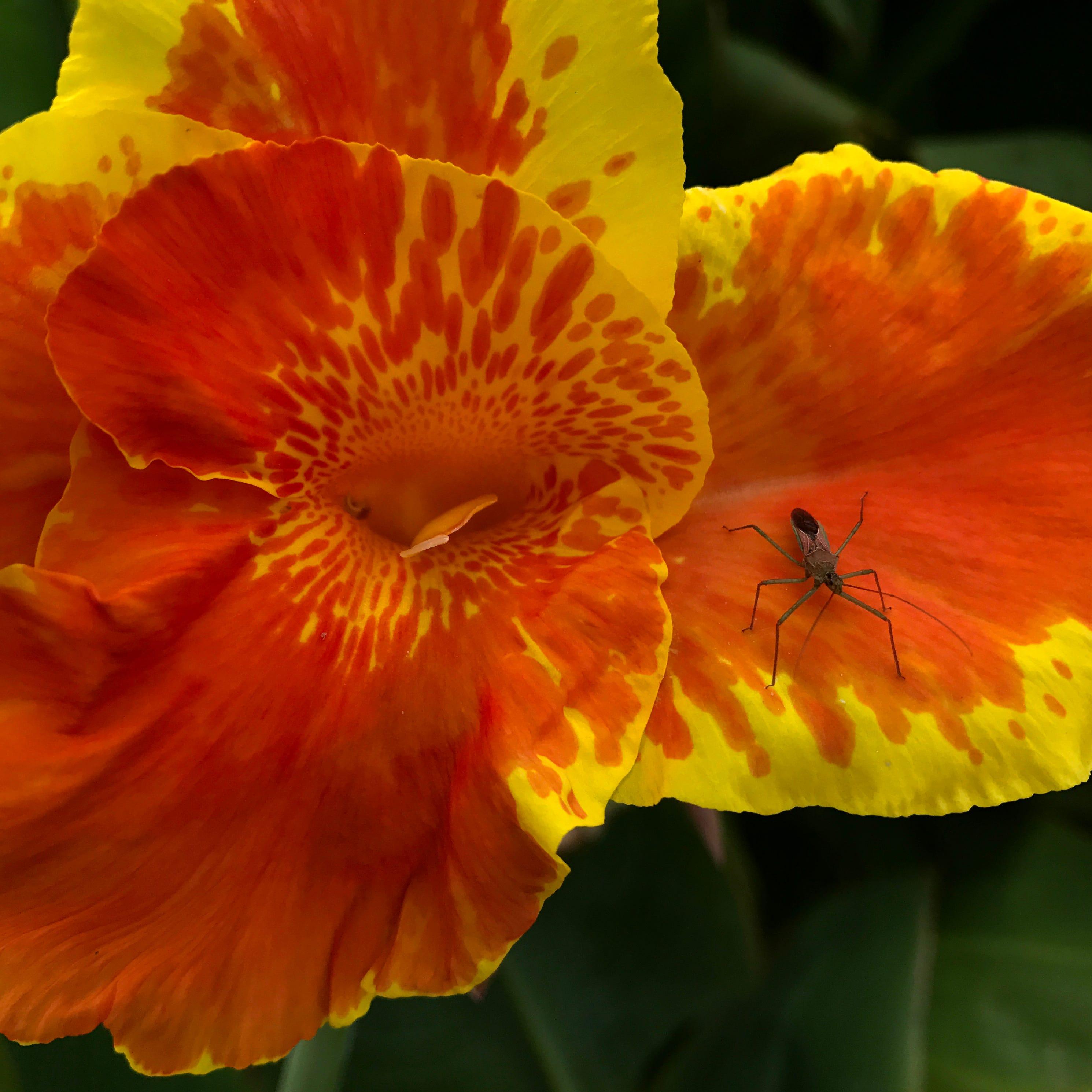 Abilene Wide Open: Butterfly Garden