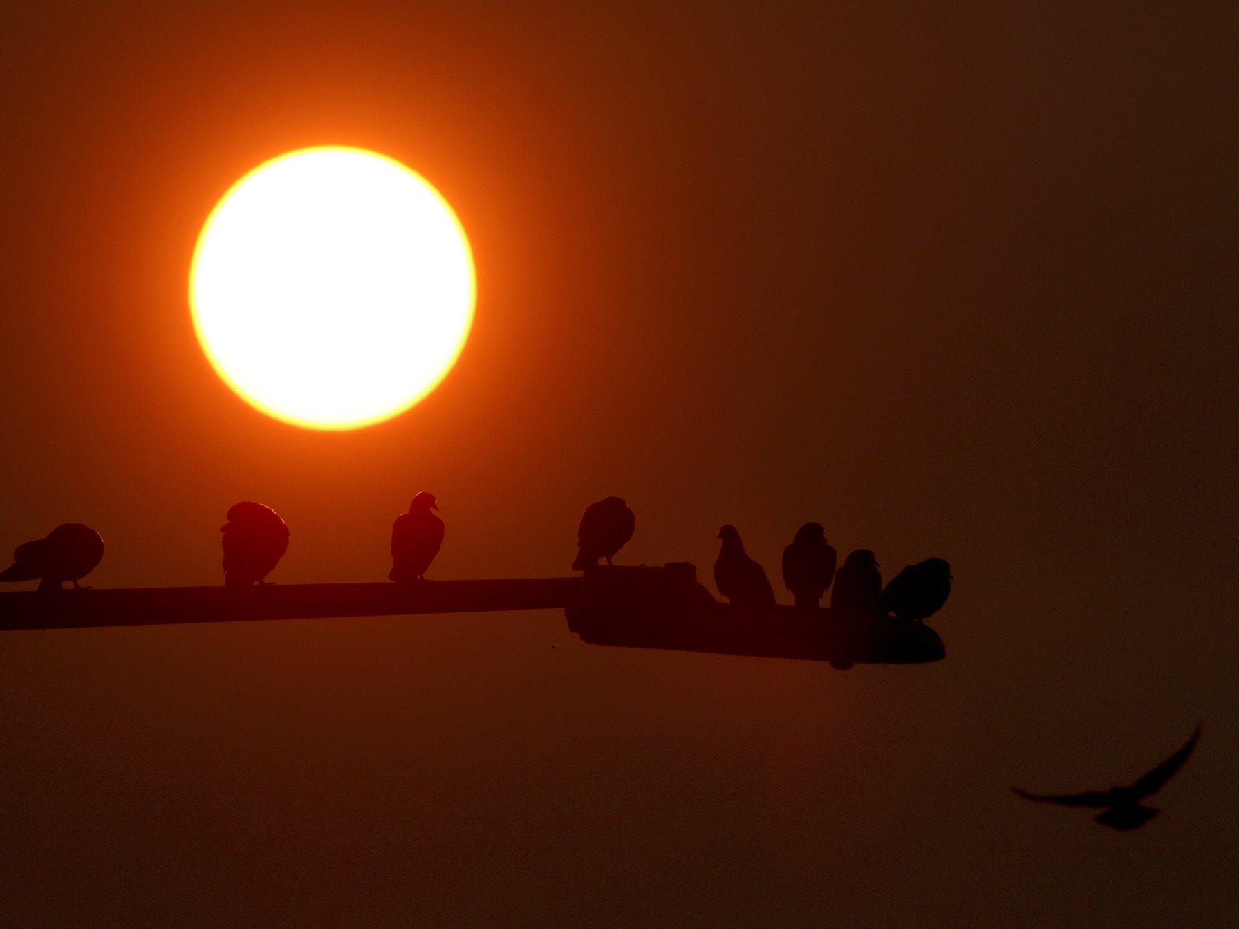Pigeons sit on a light post as the sun rises above Silverdale on August 10, 2018.