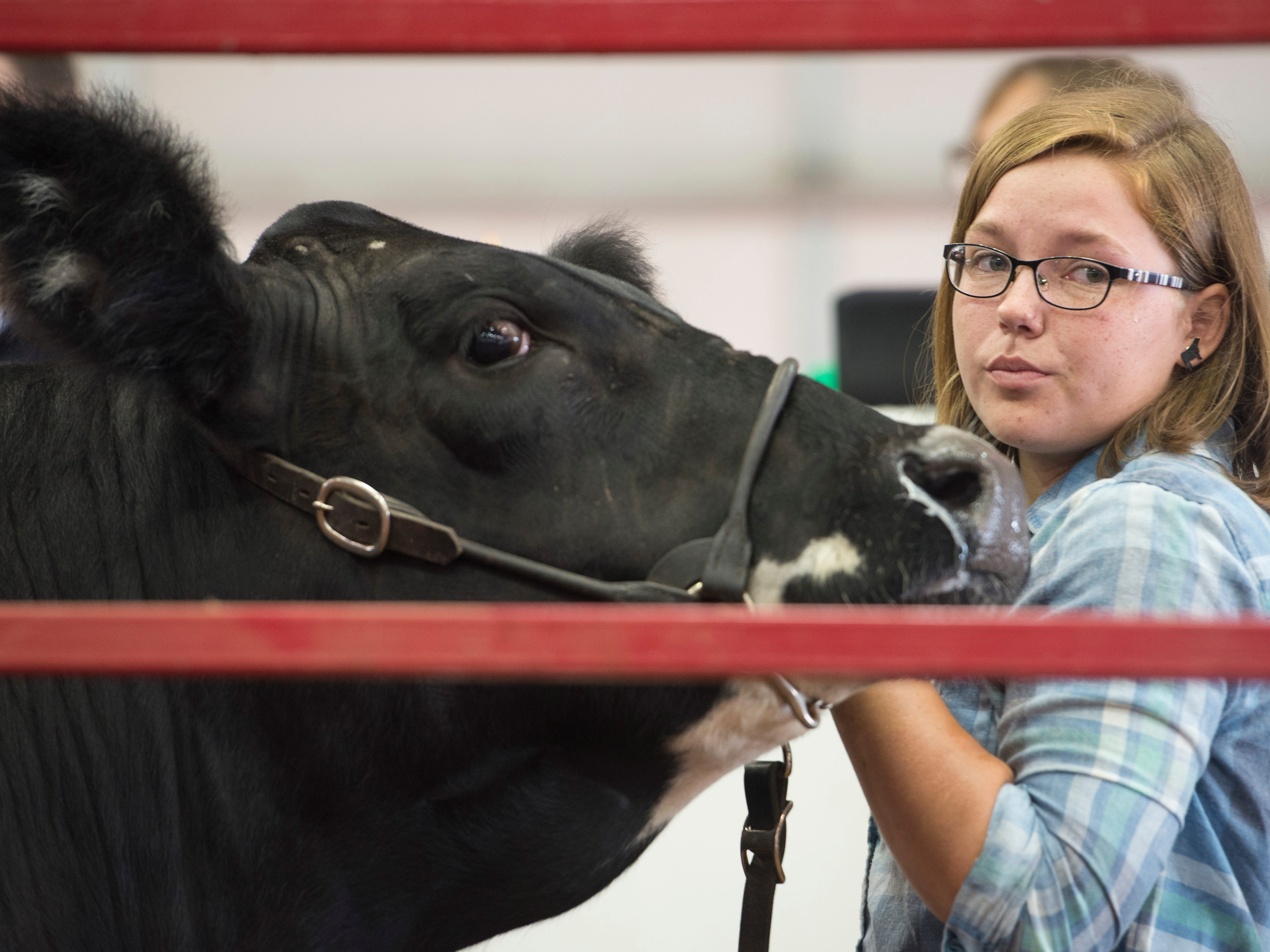 A young exhibitor displays her steer during auction at the Jr. Fair Market Steer, Poultry and Rabbit Sale at the Ross County Fair on August 11, 2018, in Chillicothe, Ohio.