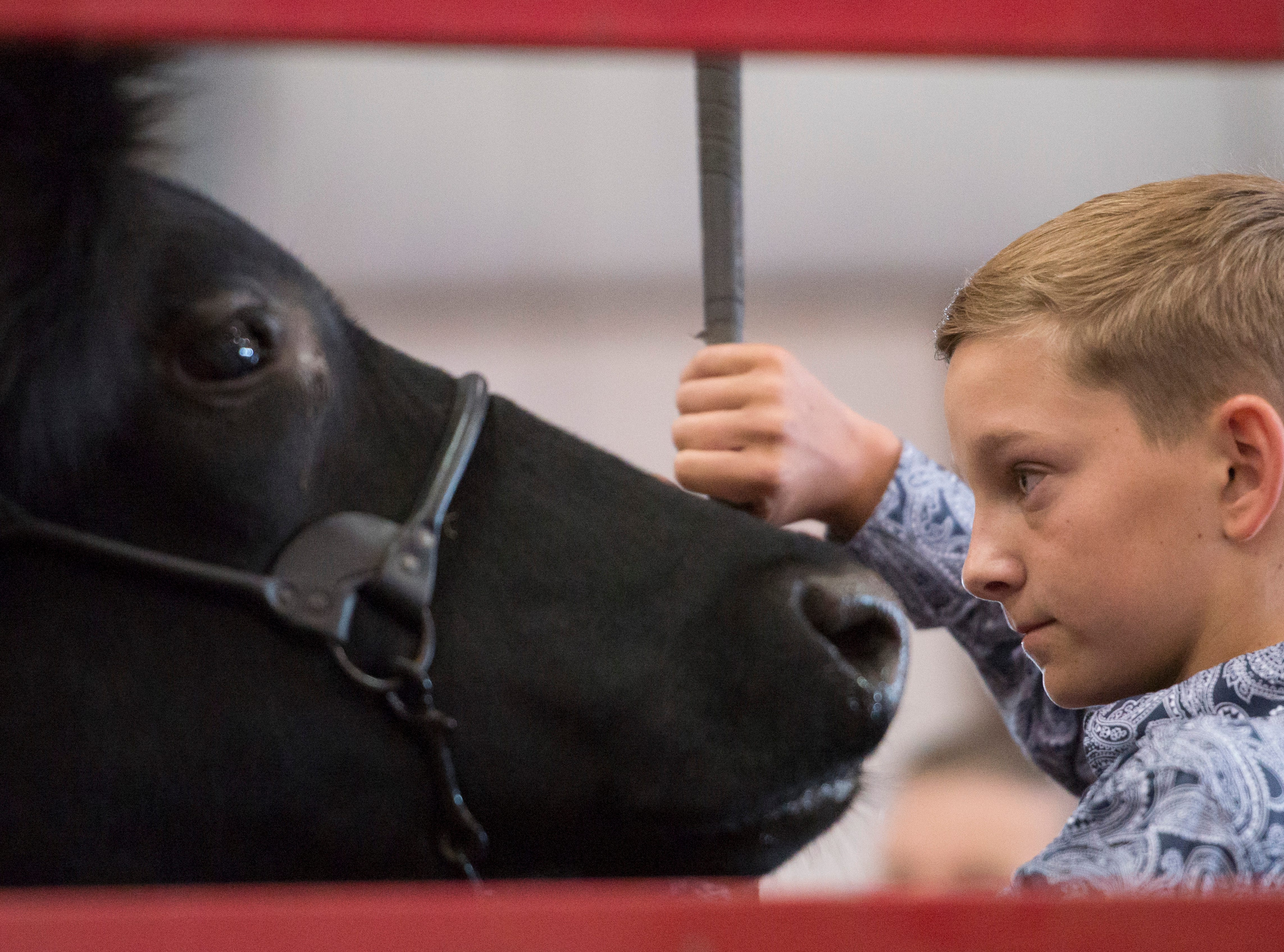 Hudson Drake comforts his Grand Champion Market Steer during the Jr. Fair Market Steer, Poultry and Rabbit Sale at the Ross County Fair on August 11, 2018, in Chillicothe, Ohio.