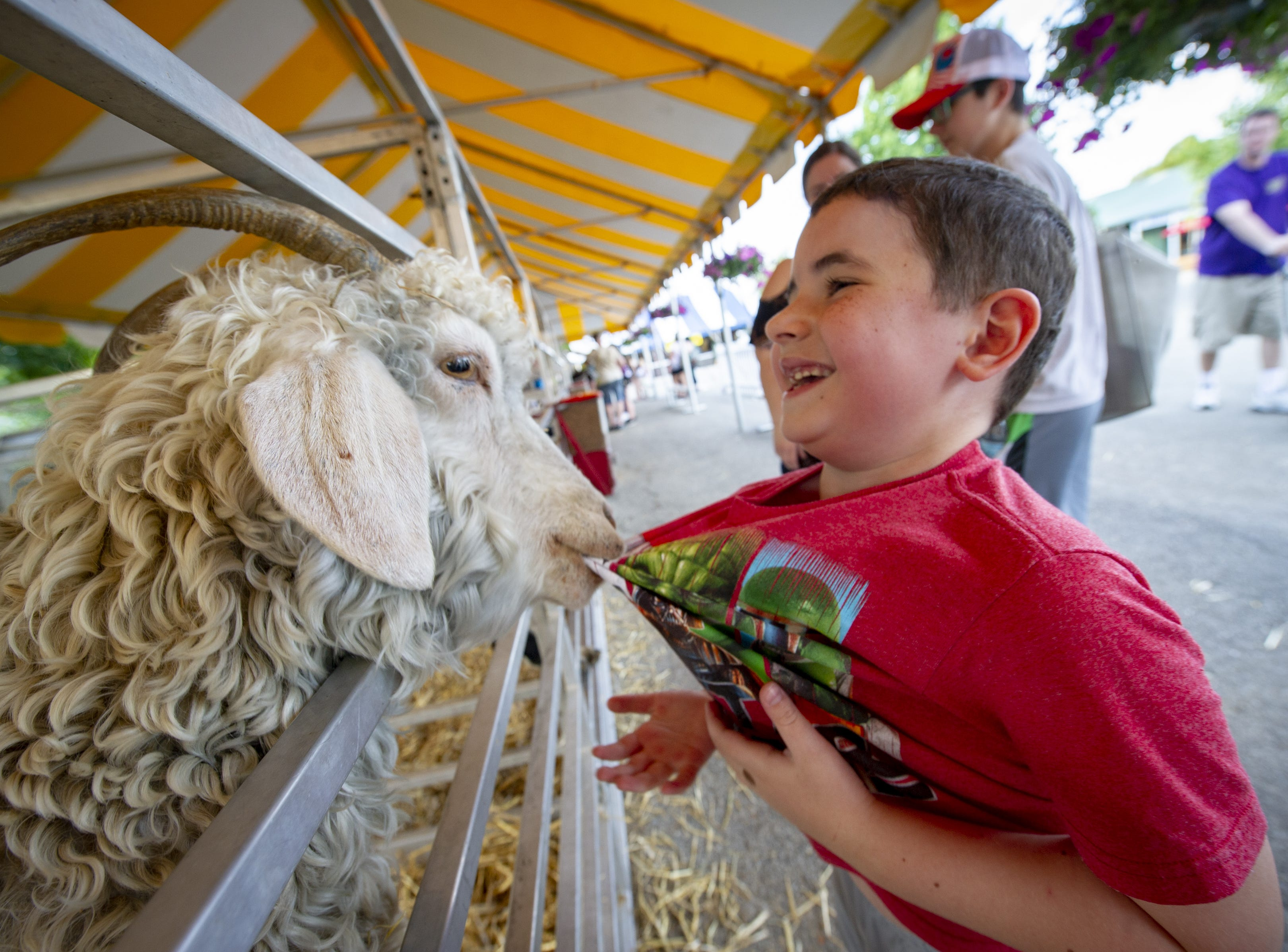 An Angora Goat grabs hold of the t-shirt of Levi Young while he visited with some of the livestock at the Indiana State Fair, Friday, Aug. 10, 2018.