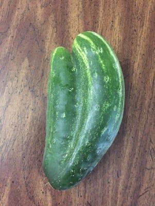 Cucumber Img 2741