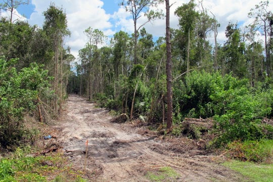 The dirt road recently cut through the forest on the corner of Veterans Memorial Boulevard and Livingston Road in North Naples signals the start of a multi-family residential apartment community named Allura.