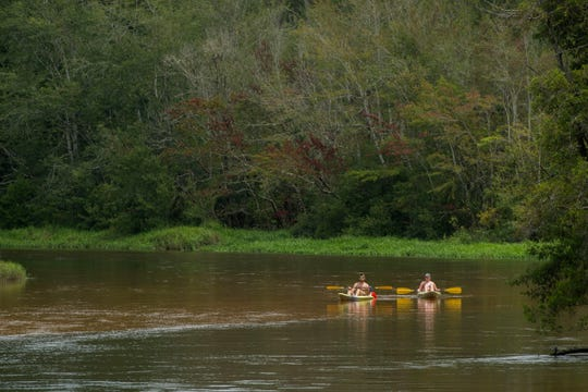 Visitors kayak on the river Saturday, August 11, 2018 at Blackwater River State Park.