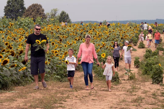 From the left, Jeremy, Liam, age 6, Jessica and Callie Bruce, age 4, carry their sunflowers out of the field during the 2nd Annual Sunflower Festival at Maple Lawn Farms near New Park Sunday.
