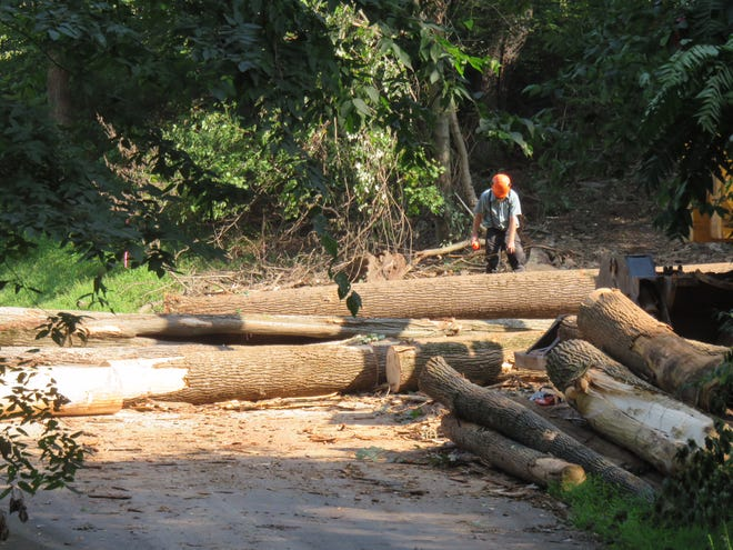A logger cuts up trees on the site of Camp Echo Trail in Southern York County.