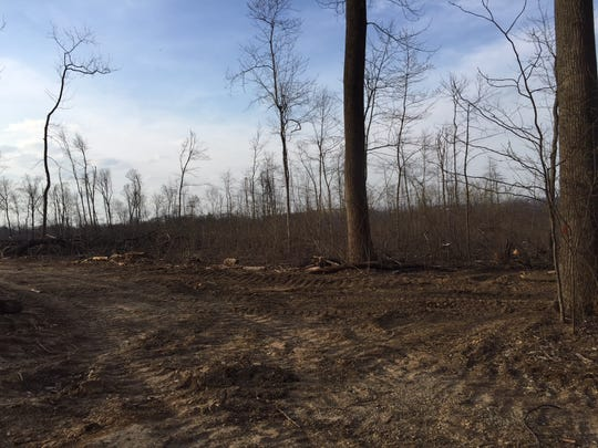 A look at the logged areas of Camp Echo Trail in southern York County. The camp is currently for sale.