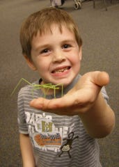 Who doesn't like a nice green insect crawling across their hand?