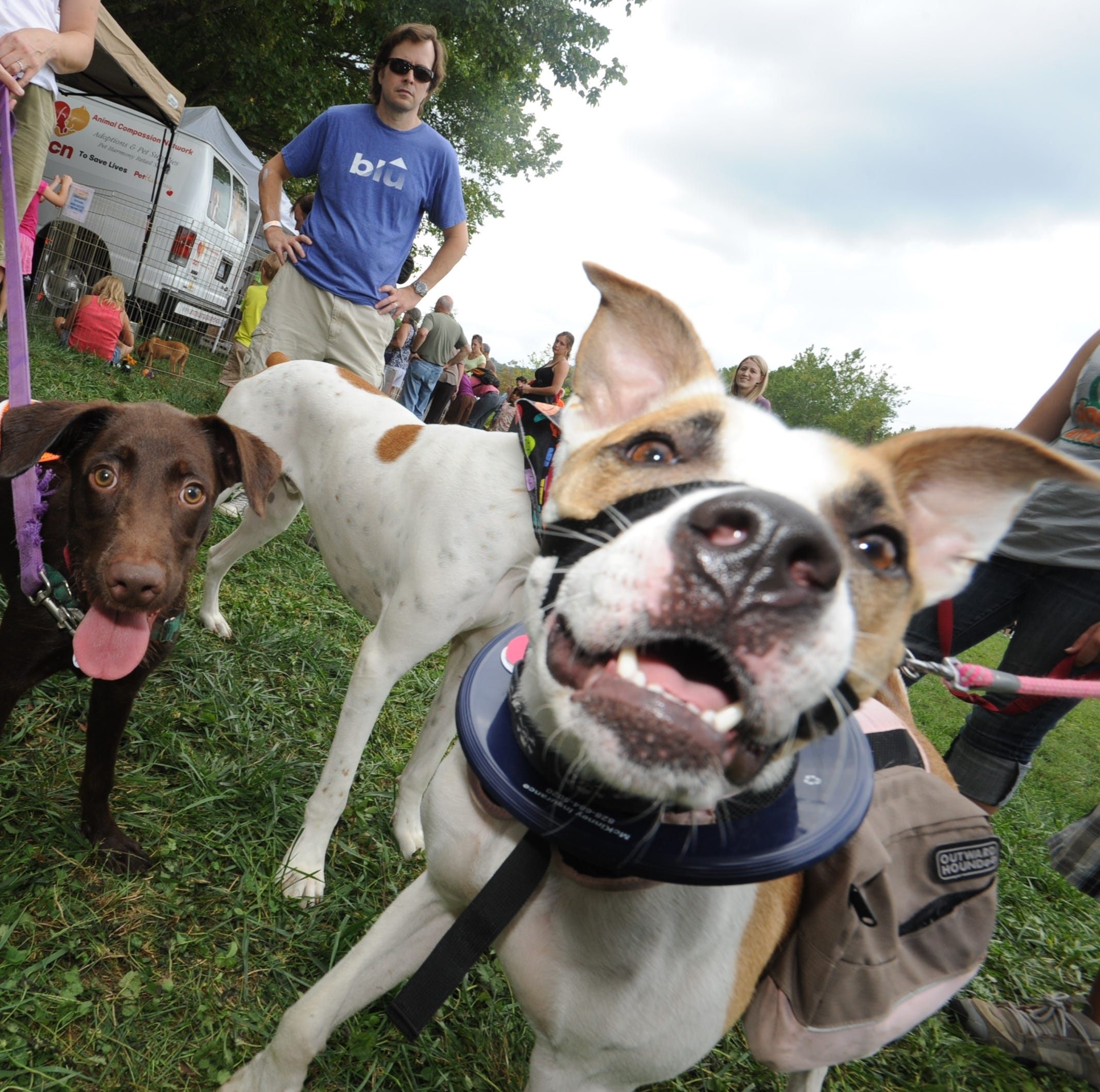 Answer Man: Dogs unwelcome at Asheville festivals? Rough pavement on I-26?