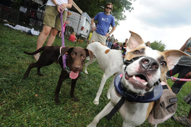 Dogs are not allowed at most city of Asheville festivals, in part because they can pose a tripping hazard and partly because hot weather and crowds can be harmful for animals.