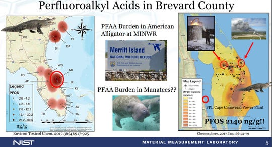 Scientists are finding perfluoroalkyl acides in alligators, dolphins, manatees and mullet at and near Kennedy Space Center. The wildlife and human effect remains mostly unknown.