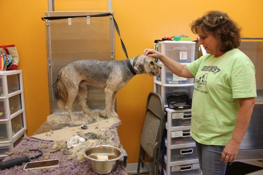 Amy Heinz pets a dog that was groomed  by AHeinz57. Its fur was matted and it had dreads.