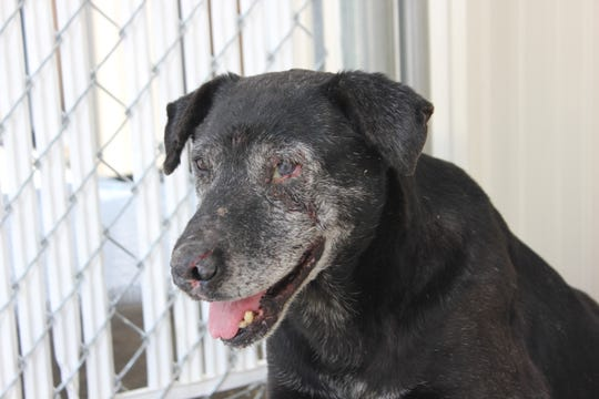 Ralph, an abandoned dog rescued from an eastern Iowa forest, has a wound in his eye after another dog attacked him.