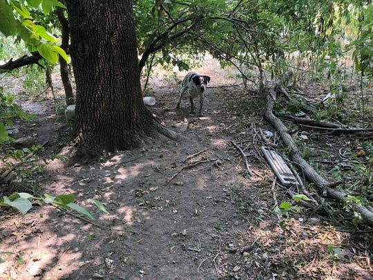 AHeinz57 volunteers rescued seven dumped dogs from an eastern Iowa forest over the weekend.