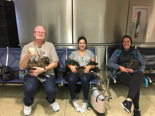 Steve Heim, 54, let stranded passengers at Seattle's Sea-Tac airport play with the rescue puppies he was bringing to metro Detroit in the early hours of Saturday, Aug. 11, 2018.