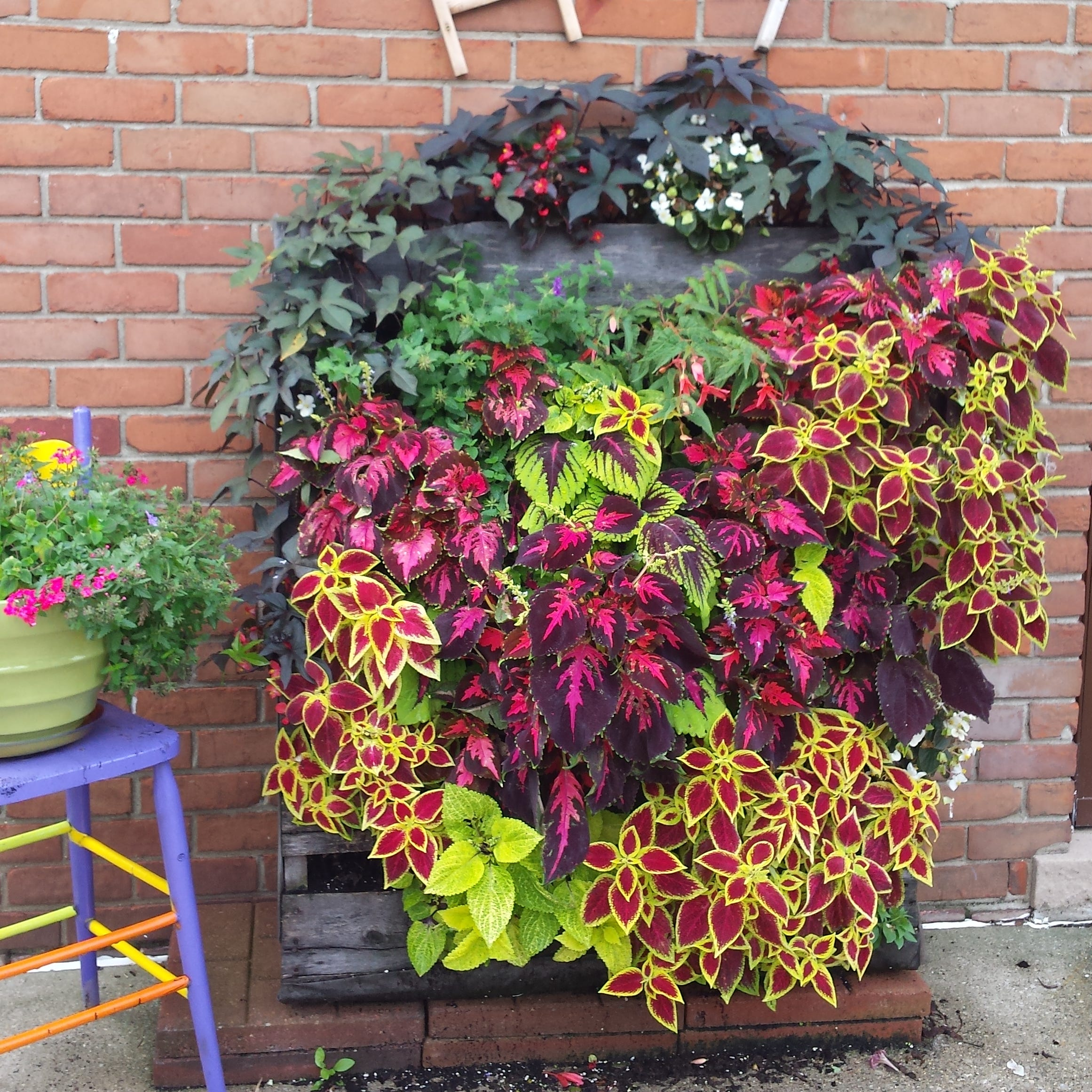 'Coleus Pallet' is this week's garden photo winner