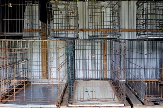 Empty Metal Cages In Animal Shelter