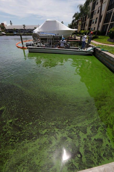 17 Algae Clean Up