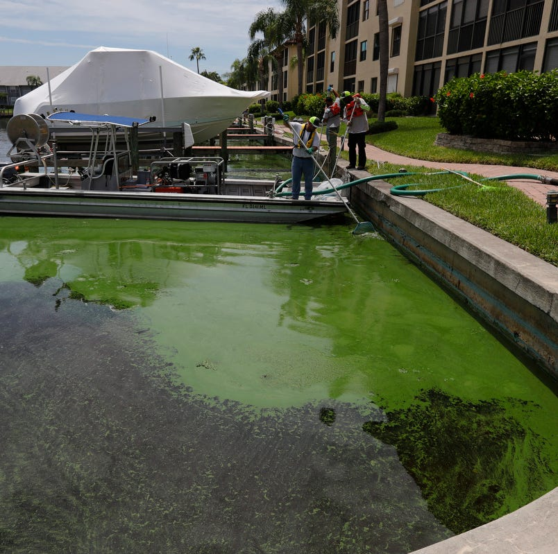 Red tide, algae blooms prompt city of Fort Myers to declare state of emergency