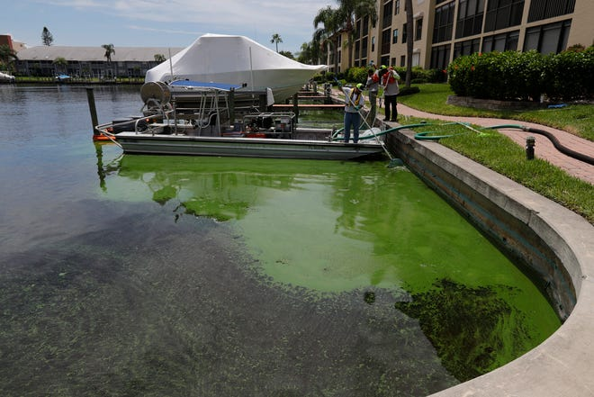 Efforts to help minimize water quality issues throughout Lee County continued Monday August 13, 2018. Crews today continued to work near the Clipper Bay condos in Cape Coral, north of Cape Coral Bridge and just east of Del Prado Boulevard.  The county has created a test program to remove the blue-green algae from some of its most impacted waterways using a $700,000 grant from the state Department of Environmental Protection. It will remove, process, treat and dispose of harmful algae blooms from select test sites in unincorporated Lee County and affected municipalities, most notably Cape Coral. During the weekend the County processed 30,000 gallons of algae material. The County expects to process between 300,000 and 400,000 gallons as part of this test program.