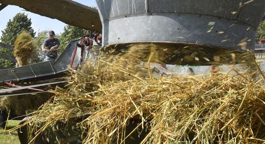 Gerald Nelson feeds a threshing machine that separates oats from straw during a demonstration last year at the Valmy Thereshee.