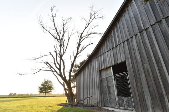 A dead tree rests at the back of the shed in Drew, Miss., where 14-year-old Emmett Till was killed by Roy Bryant and J.W. Milam.