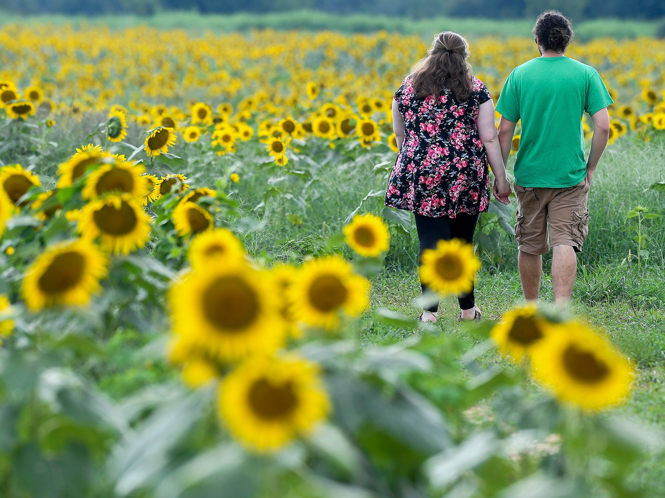 Rebekah Reeder, left, and Alex Cotton walk through the Sheridan family sunflower field about five miles west of Autaugaville, Ala. as the sunflowers bloom on Monday August 13, 2018.
