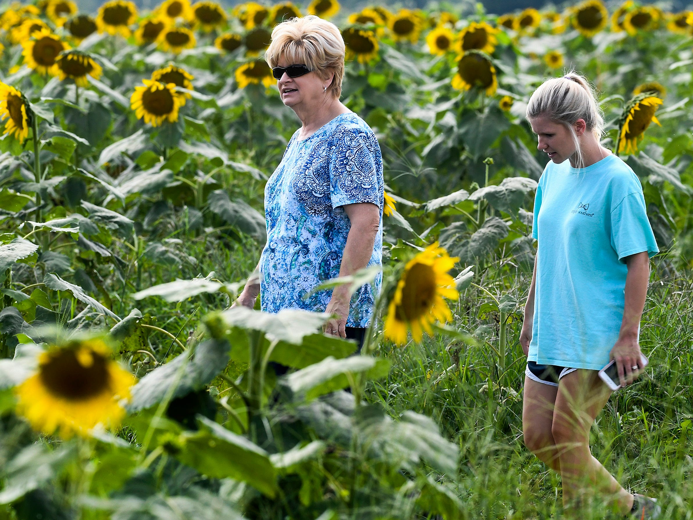 Sunflowers bloom in the Sheridan family sunflower field about five miles west of Autaugaville, Ala. on Monday August 13, 2018.