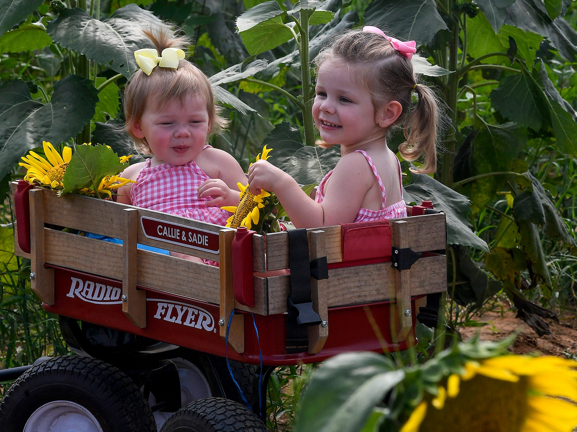 Sadie Young, left, and Callie Young pose for photos by their grandfather Mike Young in the Sheridan family sunflower field about five miles west of Autaugaville, Ala. on Monday August 13, 2018.