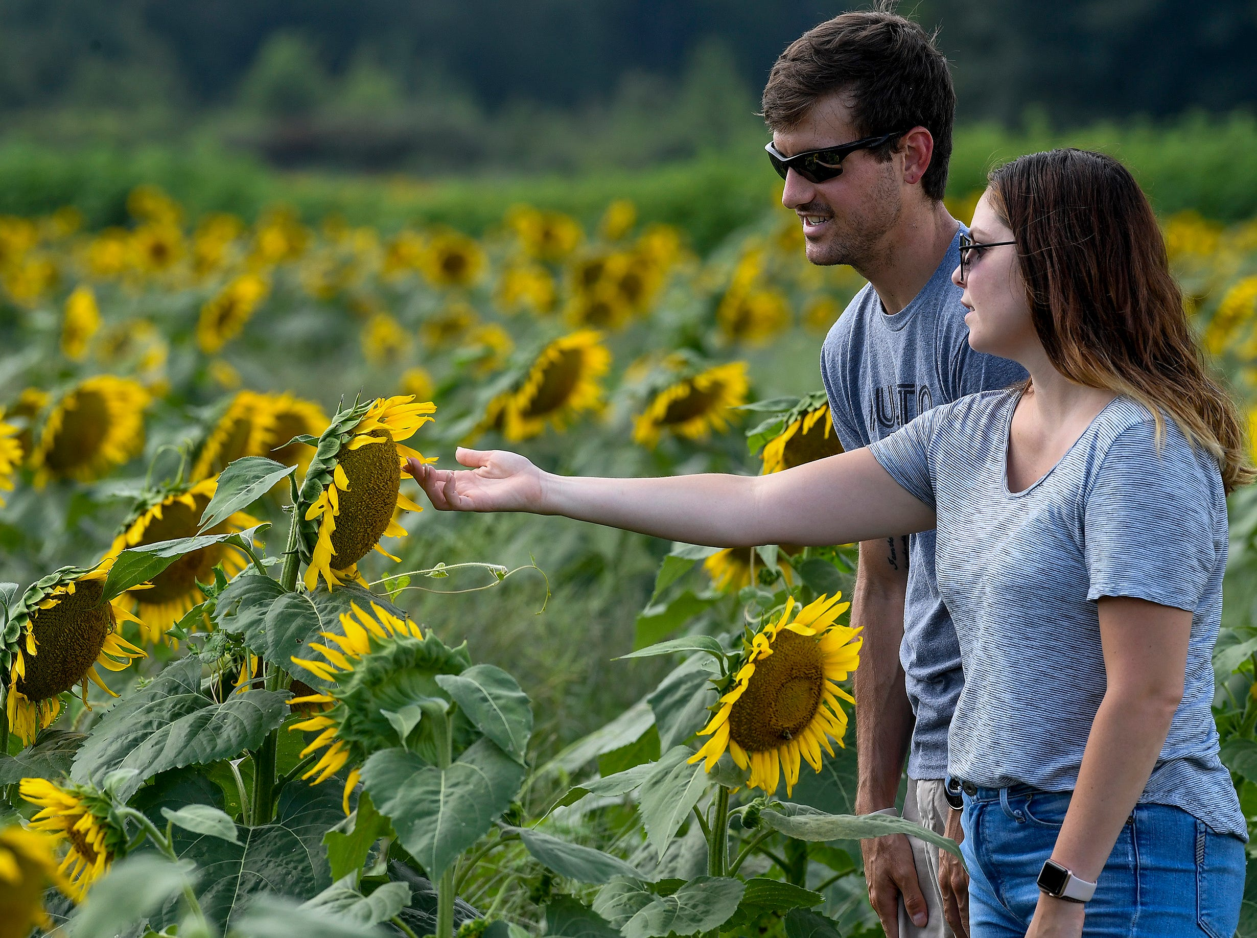 Jonathan Graham, of Birmingham, and Jennifer Evans, of Tuscaloosa, walk through the Sheridan family sunflower field about five miles west of Autaugaville, Ala. as the sunflowers bloom on Monday August 13, 2018.