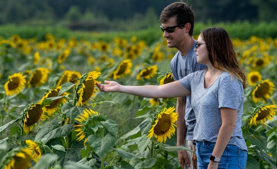 The Sunflower Festival happens this weekend at Gorman Heritage Farm.