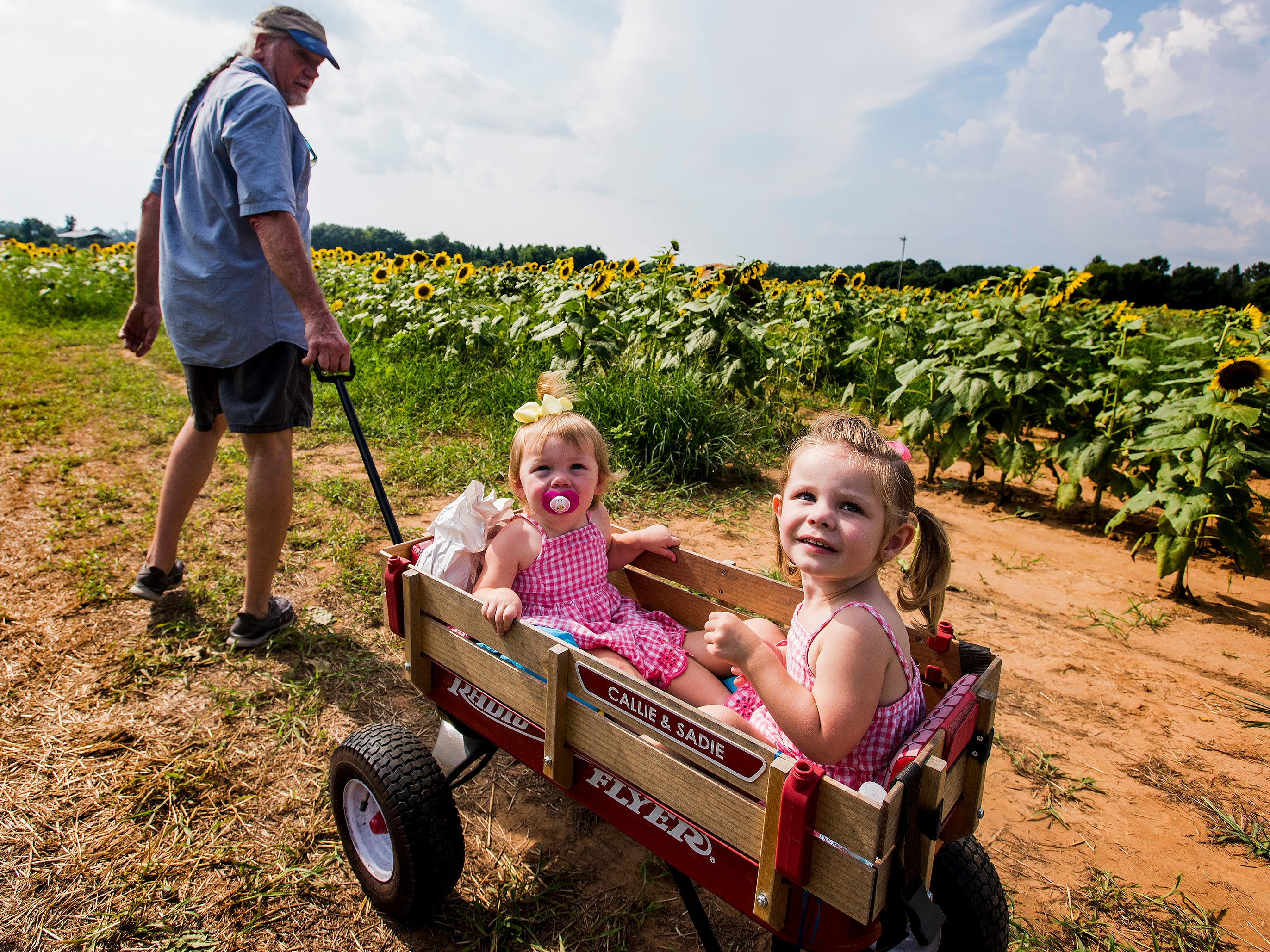 Mike Young pulls his granddaughters Sadie Young and Callie Young in the Sheridan family sunflower field about five miles west of Autaugaville, Ala. on Monday August 13, 2018.